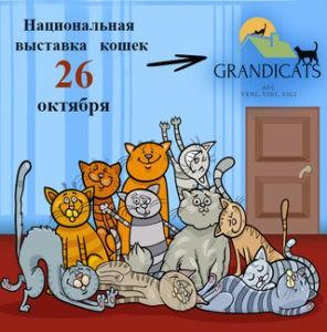 Выставка кошек 26.10.19г.