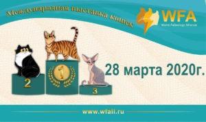 Выставка кошек 28.03.2020г.