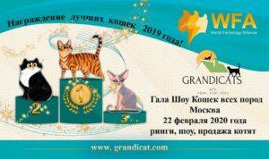 Выставка кошек 22.02.2020
