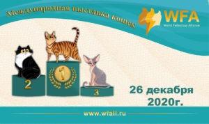 Выставка кошек 26.12.2020